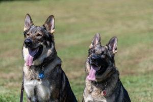 15 - Bugsy & Stella