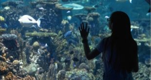 Weekend Family Fun around Baltimore Aquarium