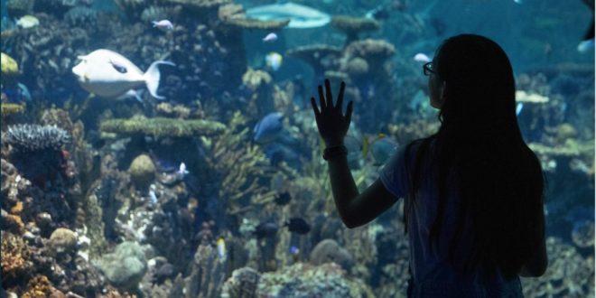 Weekend Family Fun around Baltimore Aquarium